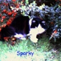 My Cat Sparky